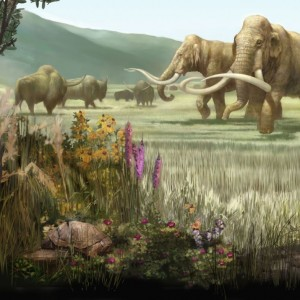 Figure 5 This figure of a late Pleistocene landscape in North America shows two Columbian mammoth on the right with extinct bison on the left in the background. Good evidence shows that these extinct forms were contemporaneous with man on this continent. Illustration from Karen Carr in North American Pleistocene landscape.