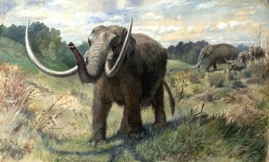 """Figure 7 The American Mastodon (Mammut americanum) is the elephant-like animal shown                         here. It is only a distant """"cousin"""" as both these proboscideans have long separate histories. With its clear association with man in Mesoamerica, it is a candidate for either a """"Curelom"""" or """"Cumom."""" This illustration is by Charles R. Knight, a famous                     illustrator of past life. Courtesy of Wikipedia Commons"""